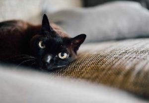 cat-on-carpet